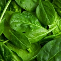 migranes-powerful-nutrients-gallery-spinach-320.jpg
